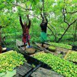 বরিশালে ঘুরতে যাওয়ার জায়গা : জেনে নিন পাঁচটি গন্তব্য